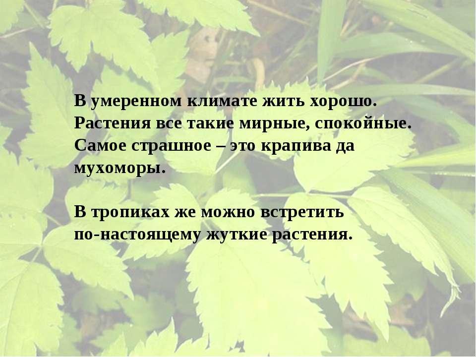 В умеренном климате жить хорошо. Растения все такие мирные, спокойные. Самое ...