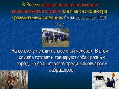 В России первая опытная поисковая кинологическая служба для поиска людей при ...