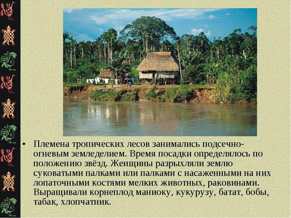 Племена тропических лесов занимались подсечно-огневым земледелием. Время поса...