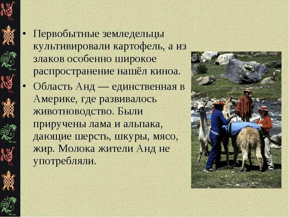 Первобытные земледельцы культивировали картофель, а из злаков особенно широко...