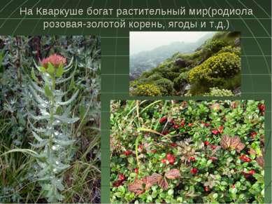 На Кваркуше богат растительный мир(родиола розовая-золотой корень, ягоды и т.д.)