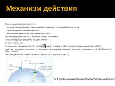 Механизм действия Строение рецепторов фактора роста: - экстрацеллюлярный доме...