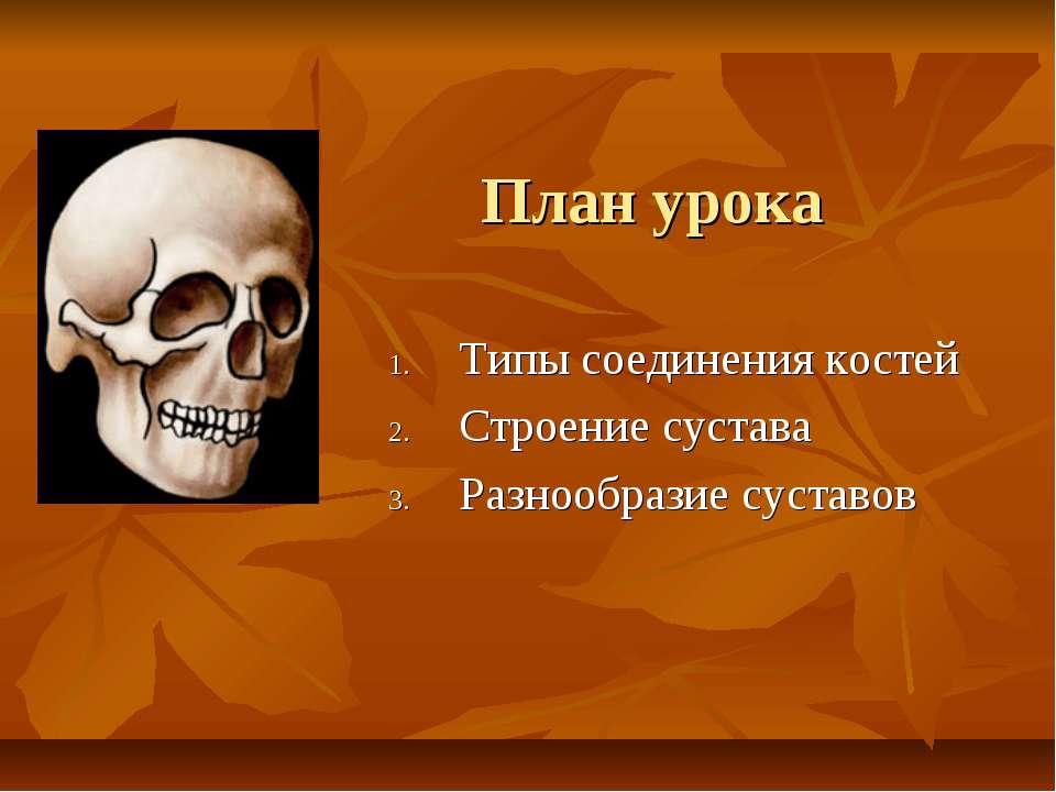 План урока Типы соединения костей Строение сустава Разнообразие суставов