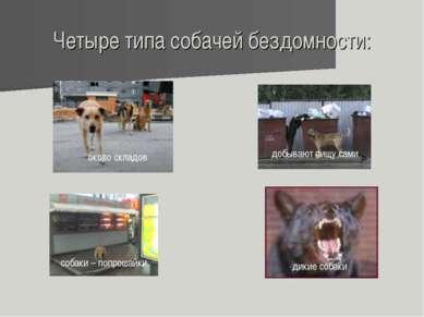 Четыре типа собачей бездомности: около складов собаки – попрошайки дикие соба...