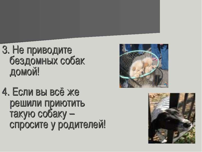 3. Не приводите бездомных собак домой! 4. Если вы всё же решили приютить таку...
