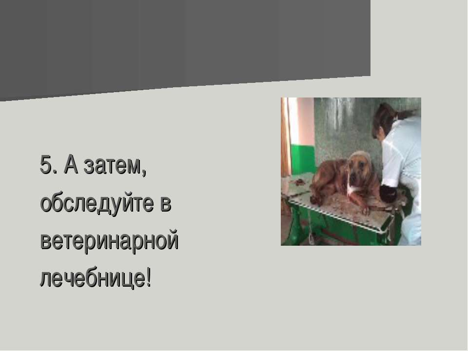 5. А затем, обследуйте в ветеринарной лечебнице!