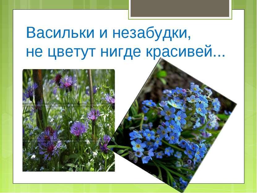 Васильки и незабудки, не цветут нигде красивей...