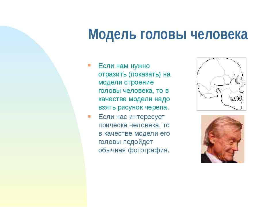 Модель головы человека Если нам нужно отразить (показать) на модели строение ...