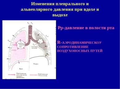 Изменения плеврального и альвеолярного давления при вдохе и выдохе Рр-давлени...