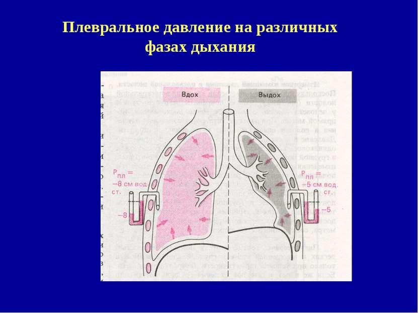 Плевральное давление на различных фазах дыхания