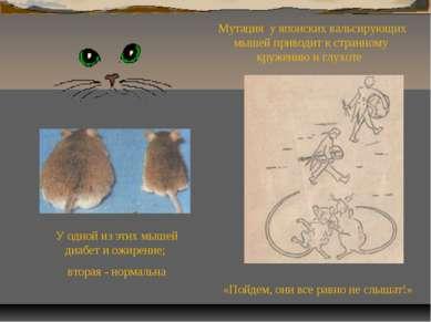 «Пойдем, они все равно не слышат!» Мутация у японских вальсирующих мышей прив...