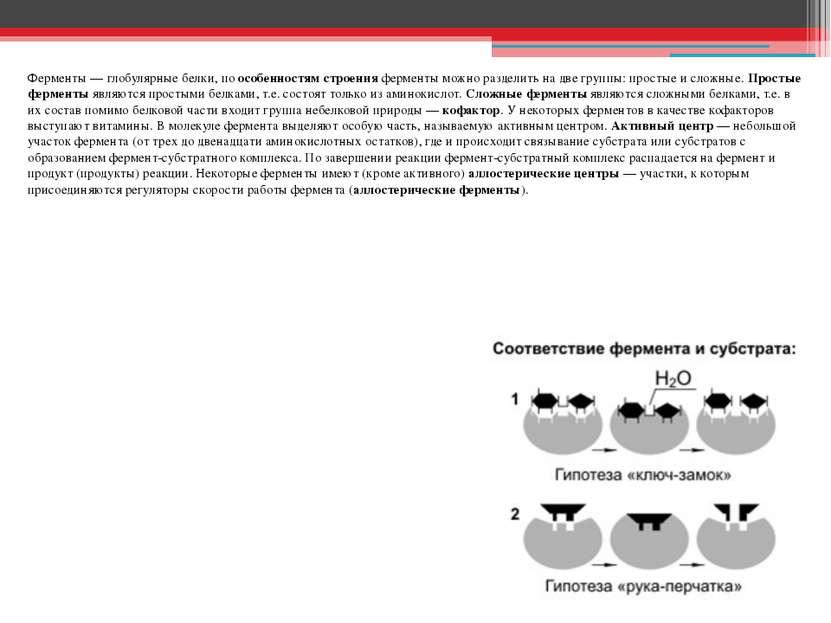 Ферменты — глобулярные белки, по особенностям строения ферменты можно раздели...