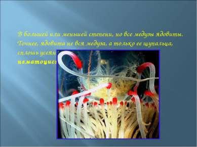 В большей или меньшей степени, но все медузы ядовиты. Точнее, ядовита не вся ...