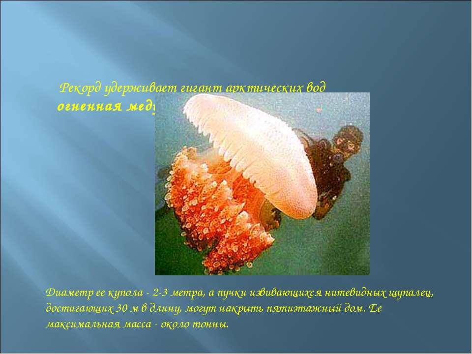 Рекорд удерживает гигант арктических вод огненная медуза. Диаметр ее купола -...