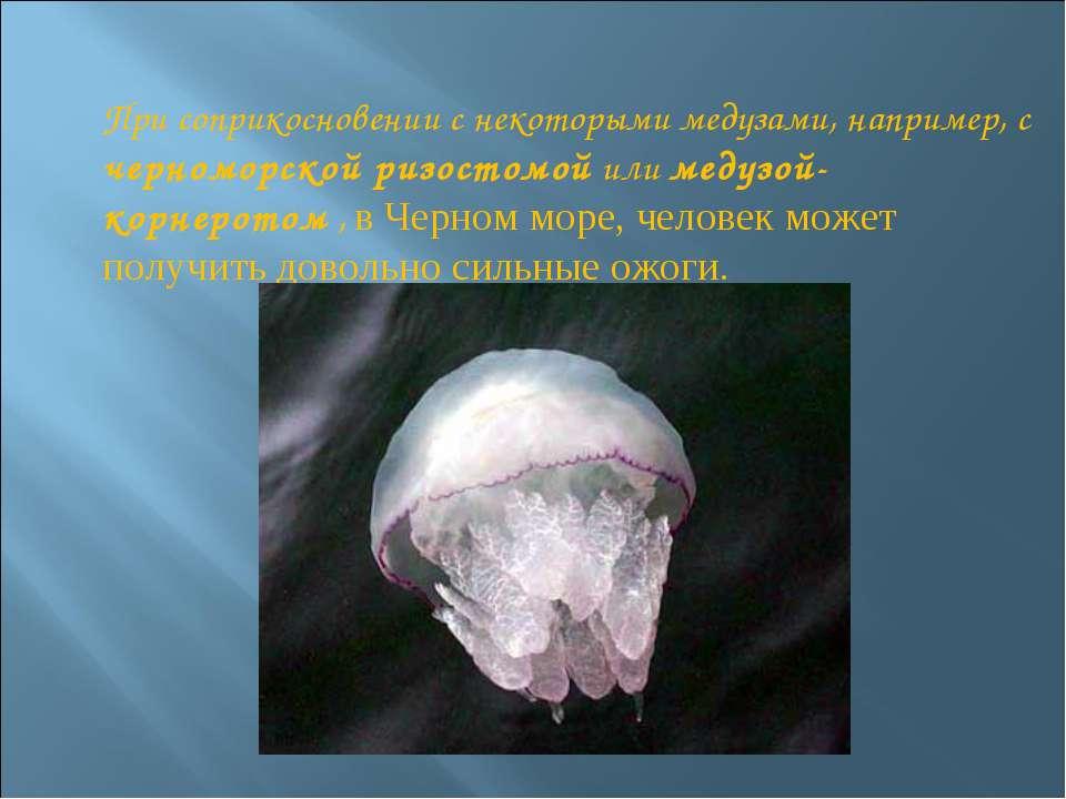 При соприкосновении с некоторыми медузами, например, с черноморской ризостомо...