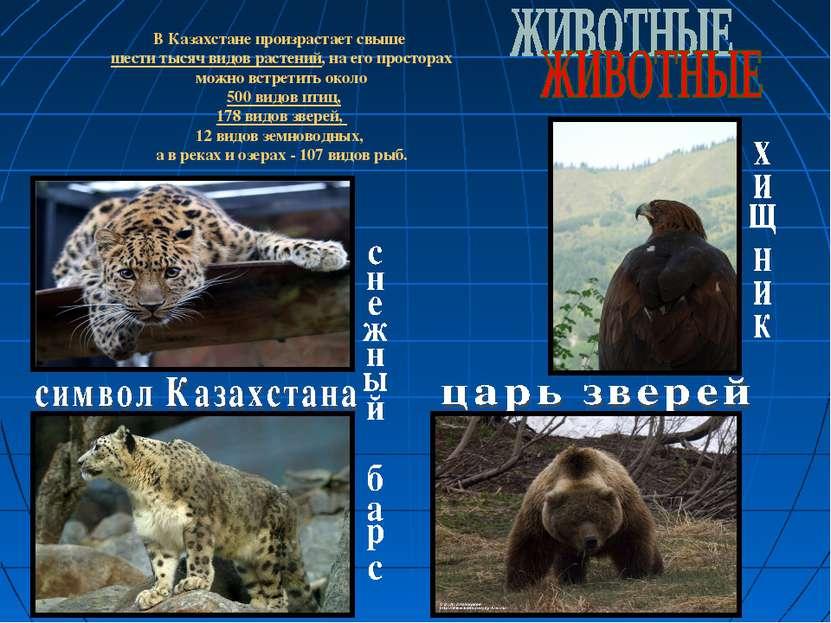 В Казахстане произрастает свыше шести тысяч видов растений, на его просторах ...