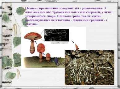 Основне призначення плодових тіл - розмноження. З пластинками або трубочками ...
