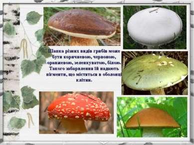 Шапка різних видів грибів може бути коричневою, червоною, оранжевою, зеленкув...