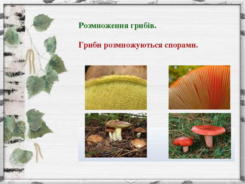 Розмноження грибів. Гриби розмножуються спорами.