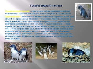 Голубой (малый) пингвин Малый (голубой) пингвин — вид из рода малых пингвинов...