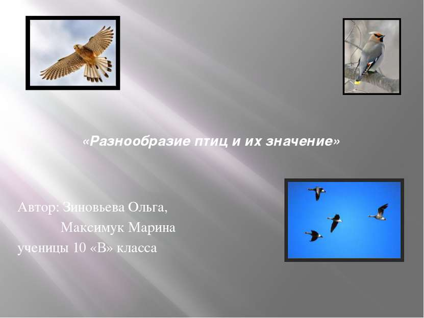 «Разнообразие птиц и их значение» Автор: Зиновьева Ольга, Максимук Марина уче...