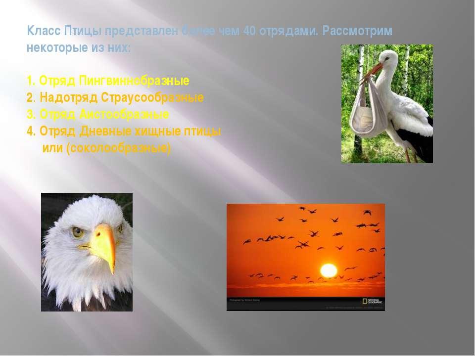 Класс Птицы представлен более чем 40 отрядами. Рассмотрим некоторые из них: 1...