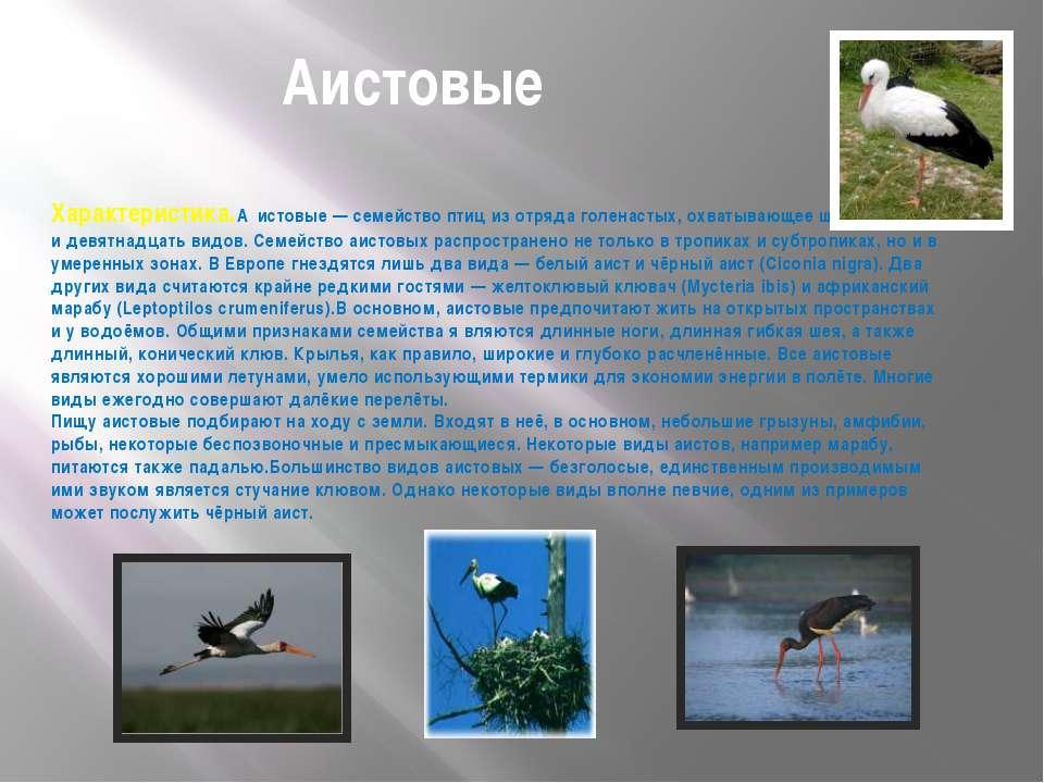 Аистовые Характеристика.А истовые — семейство птиц из отряда голенастых, охва...