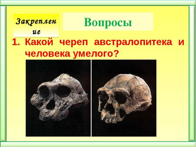 Вопросы Какой череп австралопитека и человека умелого? Закрепление