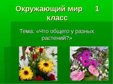 Окружающий мир 1 класс Тема: «Что общего у разных растений?»