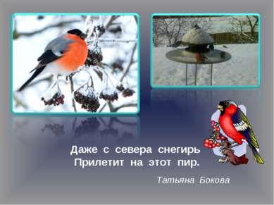Даже с севера снегирь Прилетит на этот пир. Татьяна Бокова