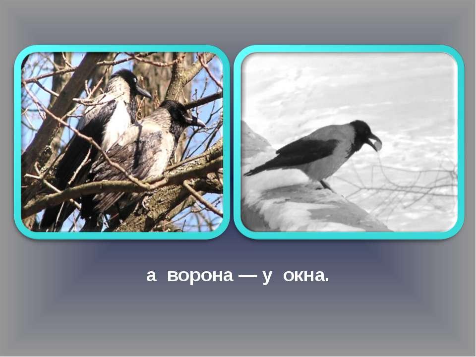 а ворона — у окна.