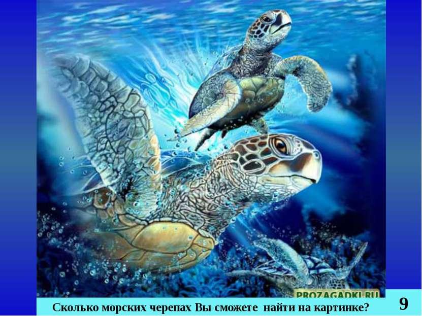Сколько морских черепах Вы сможете найти на картинке? 9