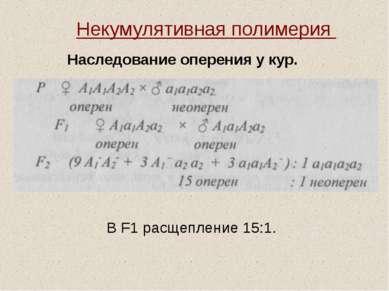 Некумулятивная полимерия Наследование оперения у кур. В F1 расщепление 15:1.