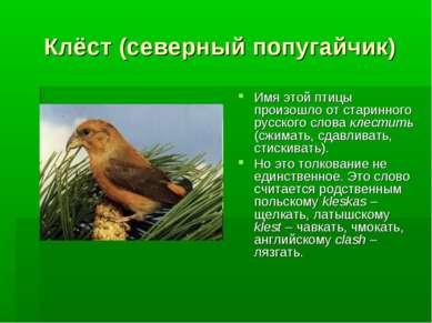 Клёст (северный попугайчик) Имя этой птицы произошло от старинного русского с...