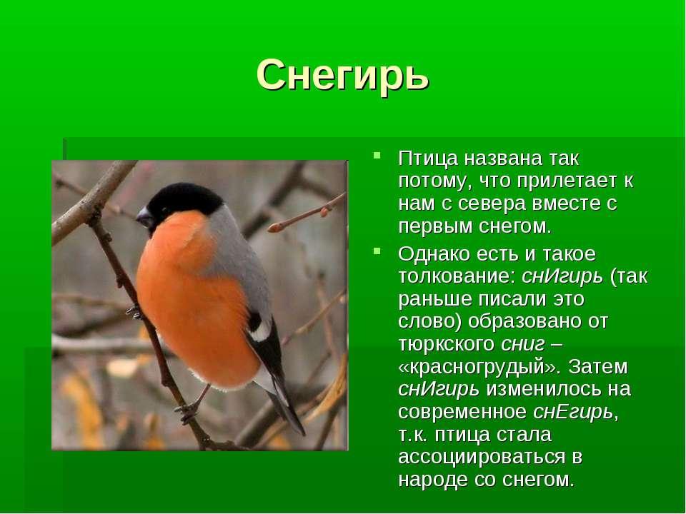 Снегирь Птица названа так потому, что прилетает к нам с севера вместе с первы...