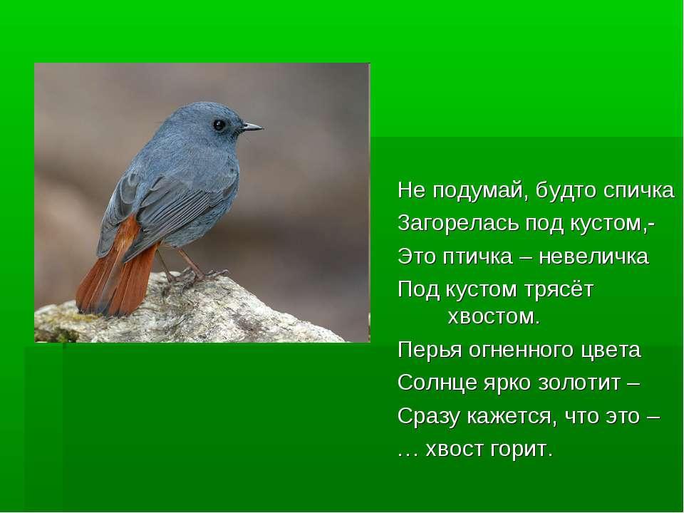 Не подумай, будто спичка Загорелась под кустом,- Это птичка – невеличка Под к...
