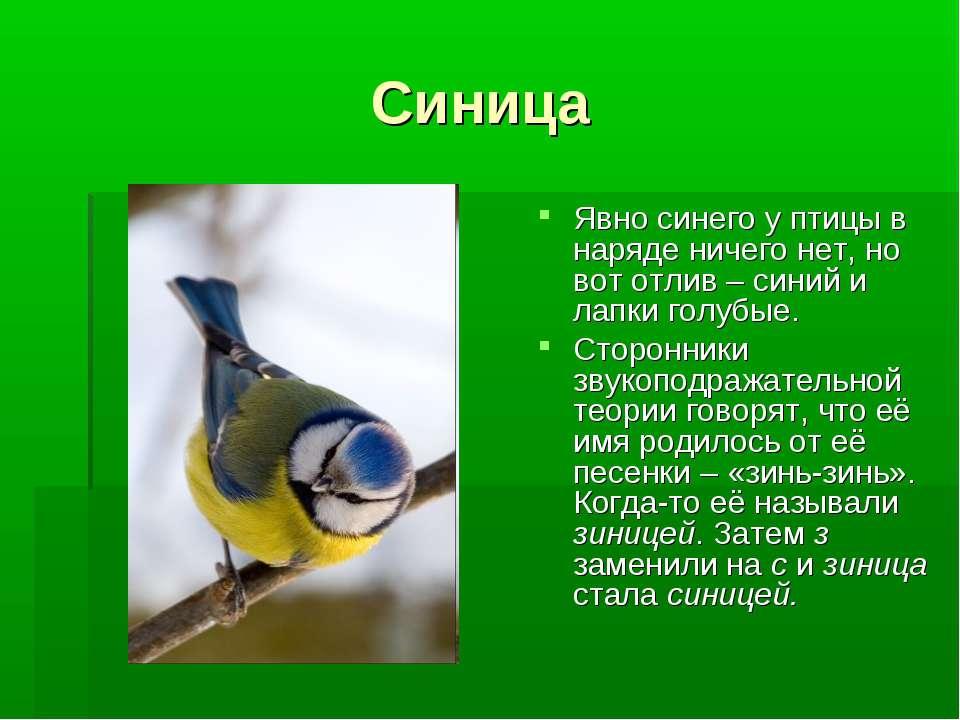 Синица Явно синего у птицы в наряде ничего нет, но вот отлив – синий и лапки ...