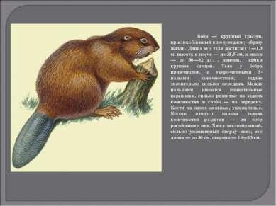 Бобр — крупный грызун, приспособленный к полуводному образу жизни. Длина его ...