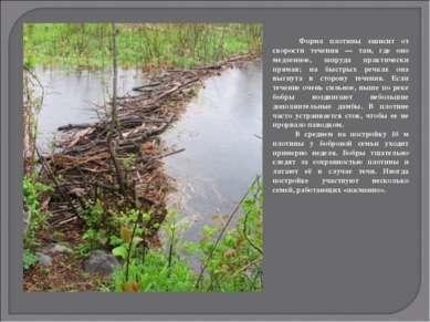 Форма плотины зависит от скорости течения — там, где оно медленное, запруда п...
