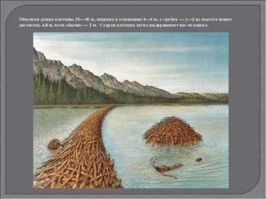 Обычная длина плотины 20—30 м, ширина в основании 4—6 м, у гребня — 1—2 м; вы...