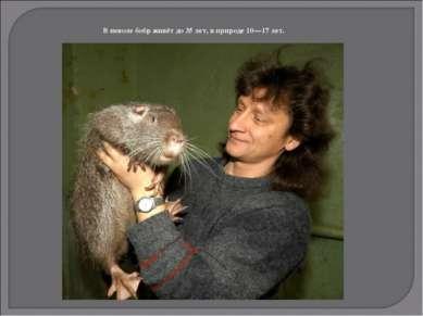 В неволе бобр живёт до 35 лет, в природе 10—17 лет.