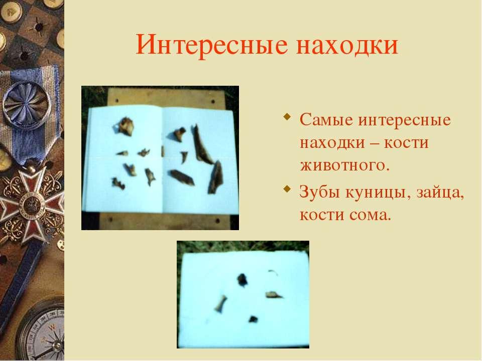 Интересные находки Самые интересные находки – кости животного. Зубы куницы, з...