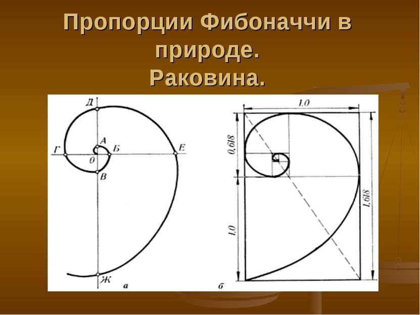 Пропорции Фибоначчи в природе. Раковина.