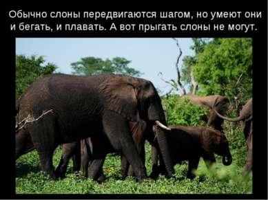 Обычно слоны передвигаются шагом, но умеют они и бегать, и плавать. А вот пры...