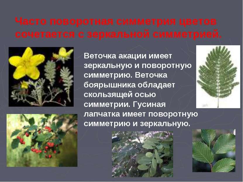 Часто поворотная симметрия цветов сочетается с зеркальной симметрией. Веточка...