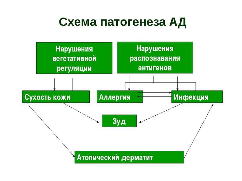 Схема патогенеза АД Нарушения распознавания антигенов Аллергия Инфекция Зуд С...
