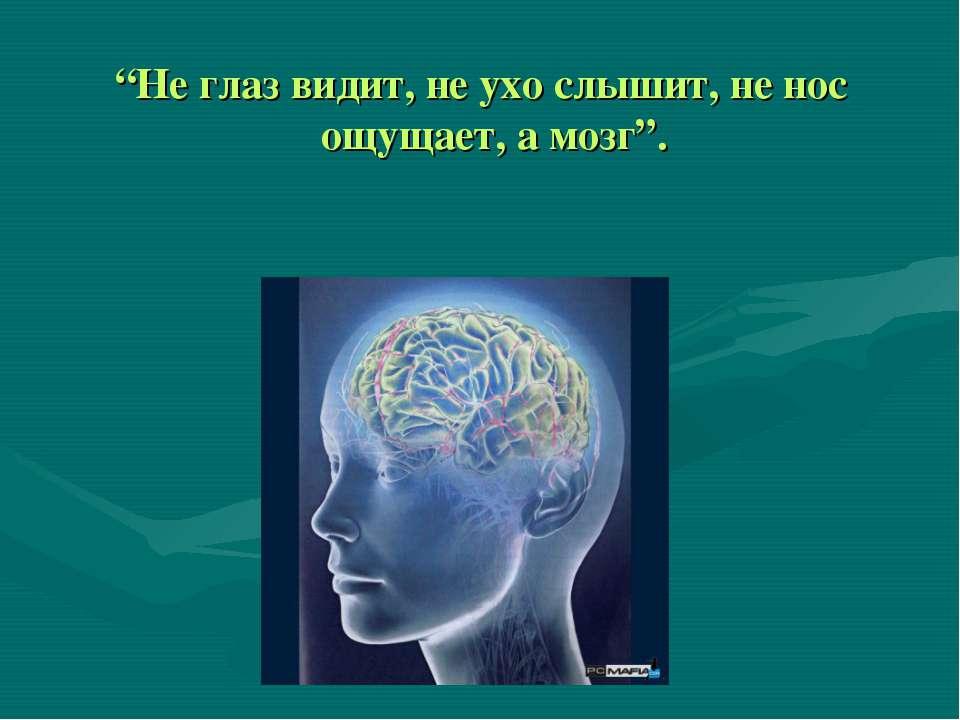 """""""Не глаз видит, не ухо слышит, не нос ощущает, а мозг""""."""