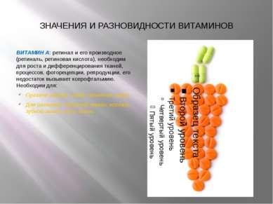 ЗНАЧЕНИЯ И РАЗНОВИДНОСТИ ВИТАМИНОВ ВИТАМИН А: ретинал и его производное (рети...