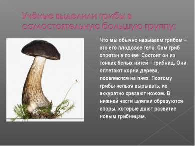 Что мы обычно называем грибом – это его плодовое тело. Сам гриб спрятан в поч...