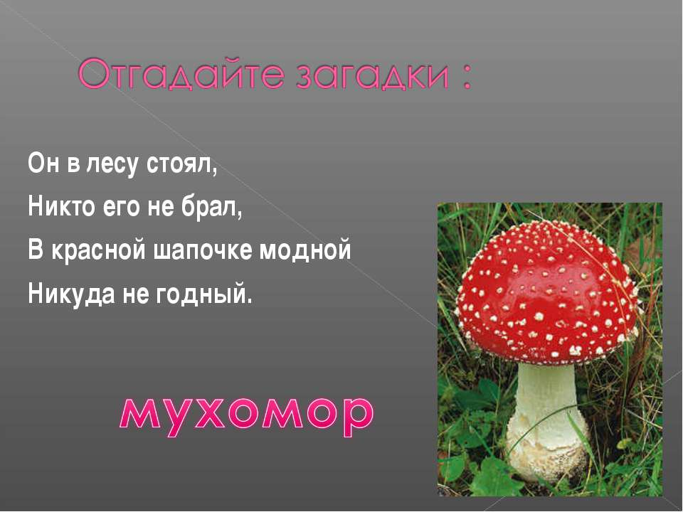 Он в лесу стоял, Никто его не брал, В красной шапочке модной Никуда не годный.